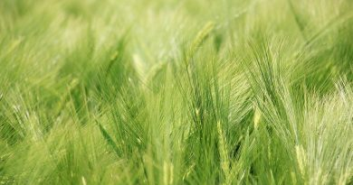 The Response of Spring Barley (Hordeum vulgare L.) to Climate Change in Northern Serbia